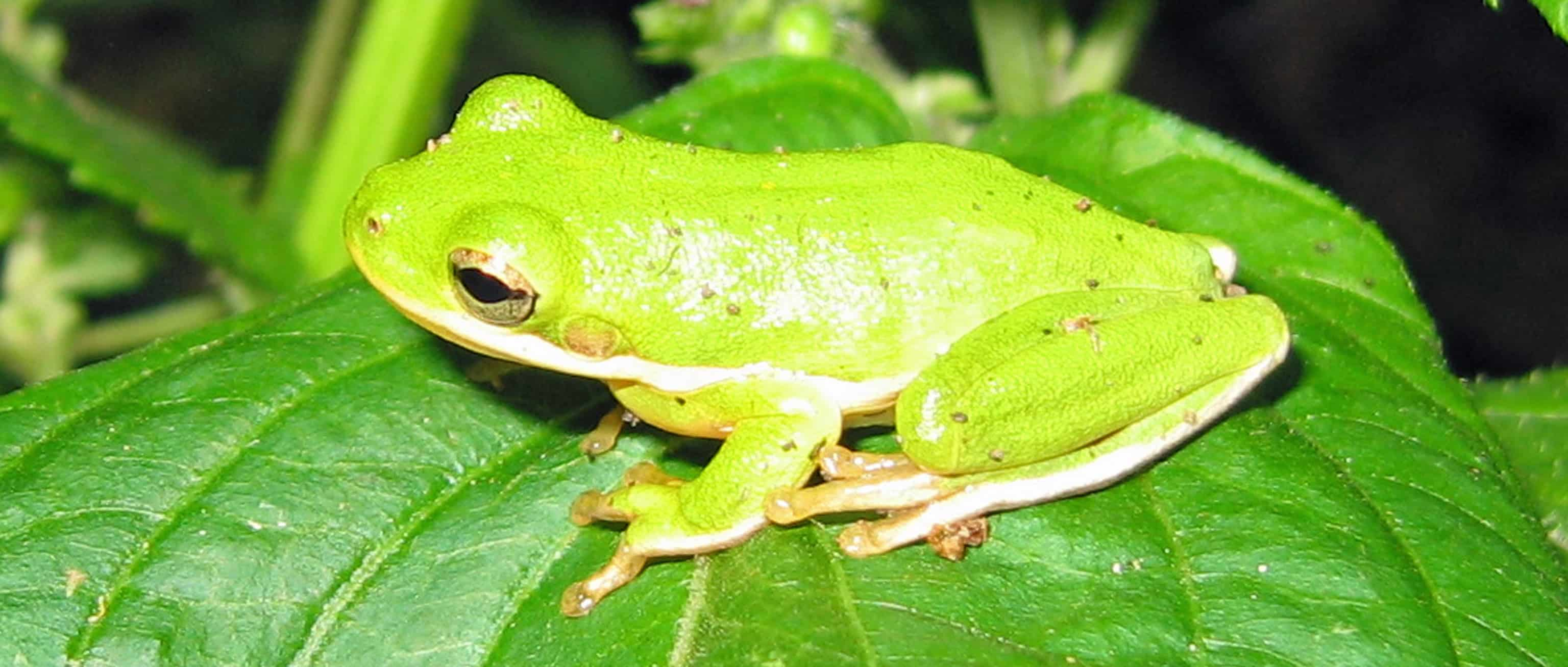 how frogs cope with road salt and brackish water the wildlife