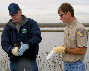 As part of the national HPAI surveillance effort in 2015, USDA Wildlife Services disease biologists and their state partners (below) collected nearly 45,000 samples from wild birds throughout the United States. ©Credit: Gail Keirn/USDA