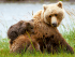 Brown Bears in Lake Clark National Park, Alaska. ©Good Free Photos
