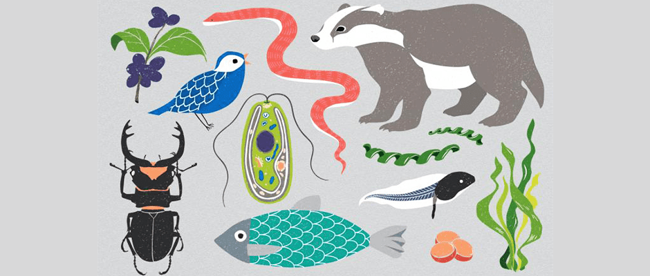 Scientists set out to map genomes of 1.5 million species
