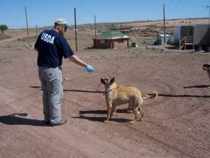 Author Rich Chipman, CWB, offers baits to dogs in a study testing preferred bait flavors in oral rabies vaccines. ©USDA