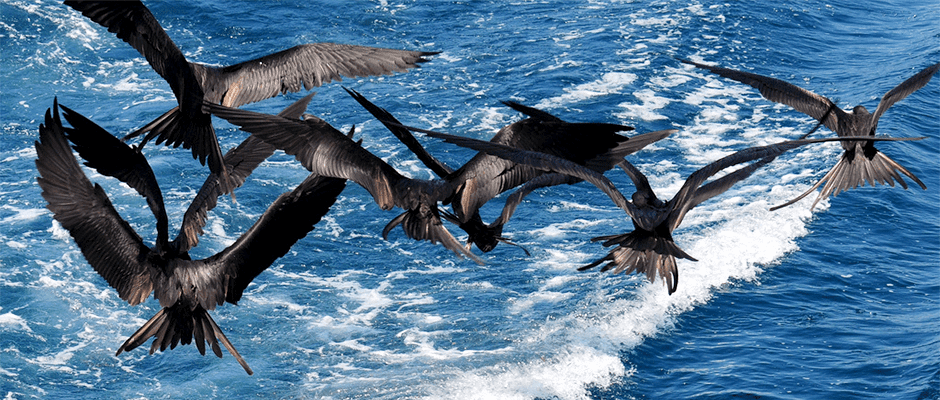 Seabirds face growing competition from fishing industry