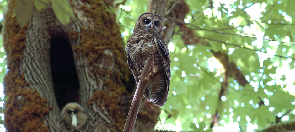JWM: For spotted owls, missing the trees for the forest
